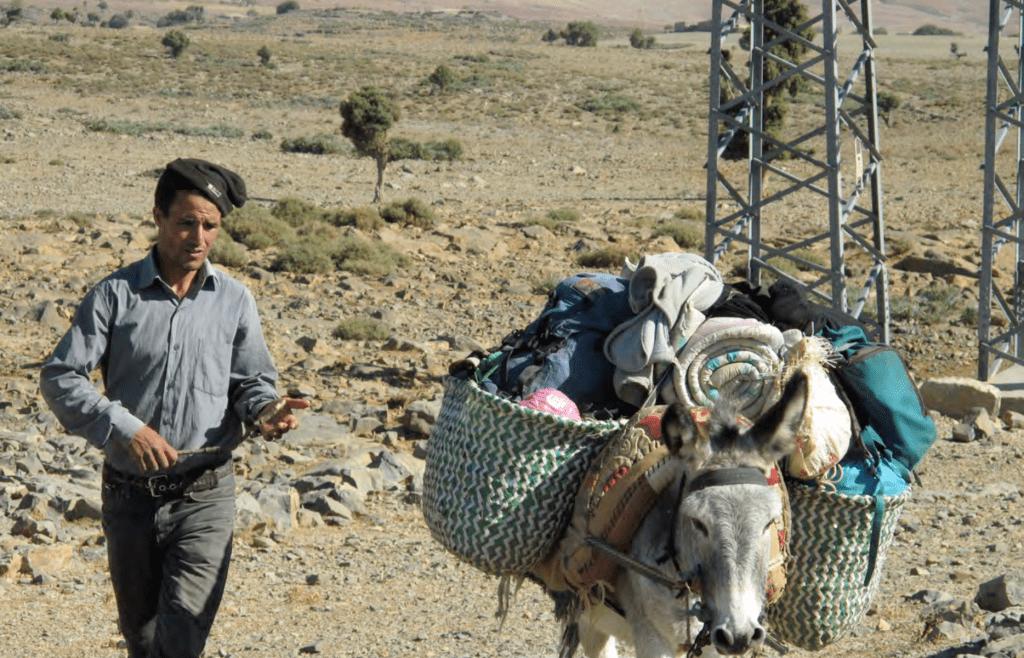 Pastorales Electriques 2