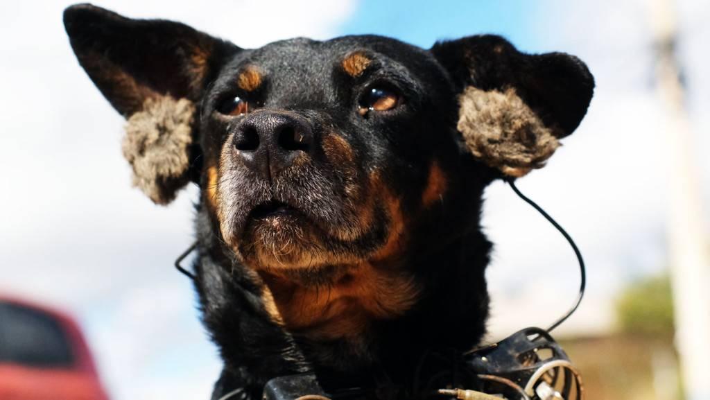 Entretien Felix Blume Audioblog Arte - Mutt Dogs