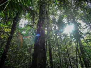 01 Aube en forêt (low)