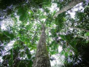 05 Avancée en forêt (low)
